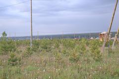 п. Бобровский, ул. Достоевского (городской округ Сысертский) - фото земельного участка