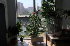 Екатеринбург, ул. Маяковского, 25а (Пионерский) - фото офисного помещения