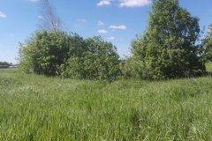 с. Некрасово - фото земельного участка