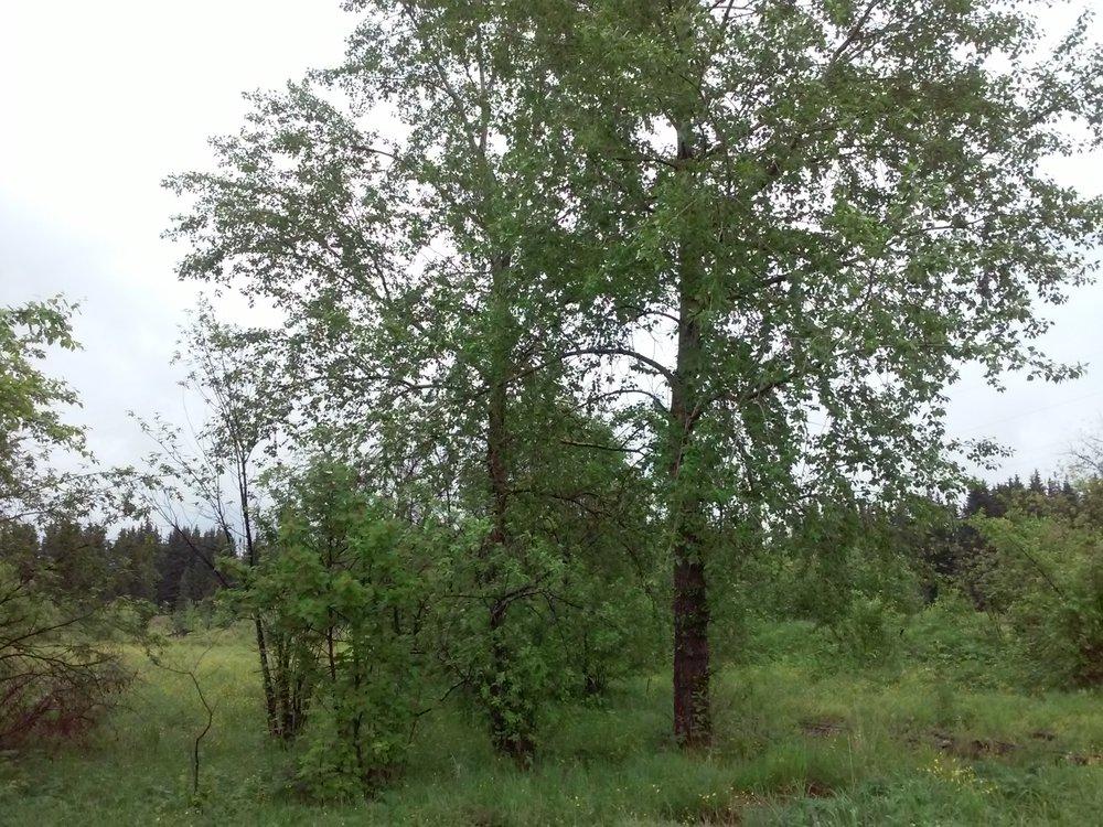 п. Привокзальный, ул. Зеленая , 75 (городской округ Верхотурский) - фото дома (2)
