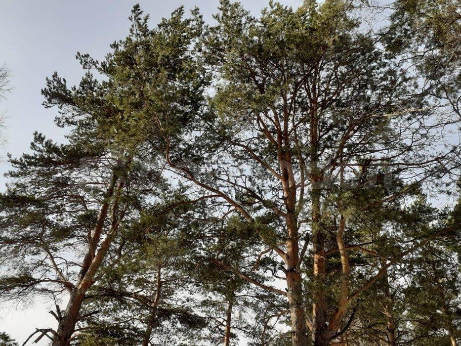 п. Становая, ул. Гагарина, 36В (городской округ Березовский) - фото земельного участка (1)