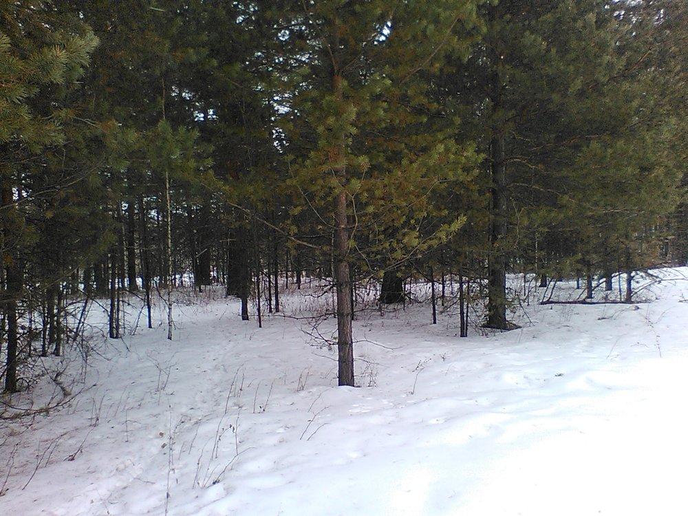 п. Растущий (городской округ Белоярский) - фото земельного участка (2)
