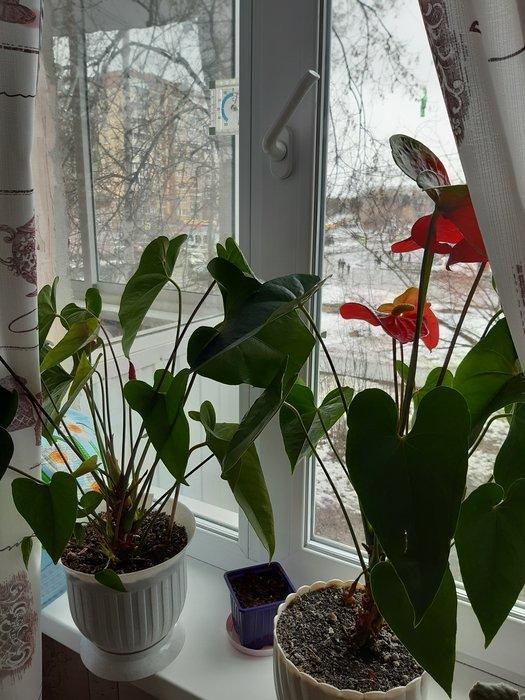 Екатеринбург, Билимбаевская ул.16 (Старая Сортировка) - фото квартиры (1)