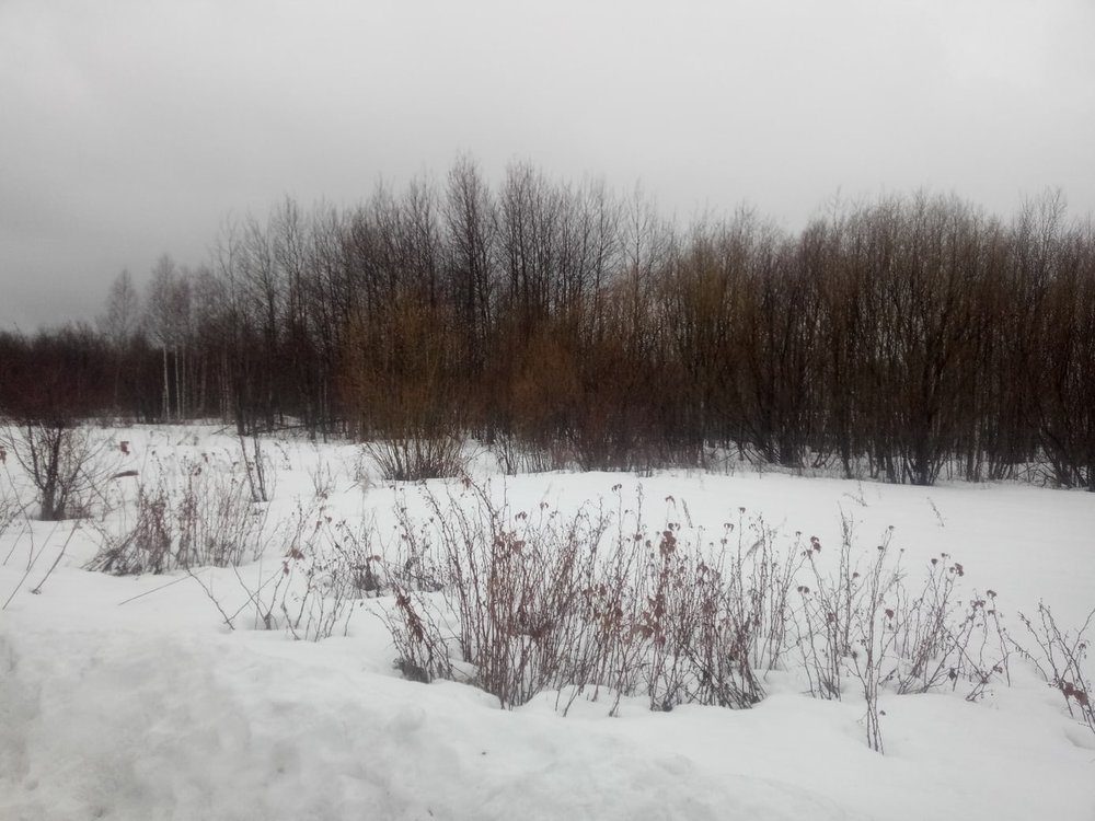 г. Серов, к/с Родничок, ул. Овощная, 161 (городской округ Серовский) - фото сада (1)