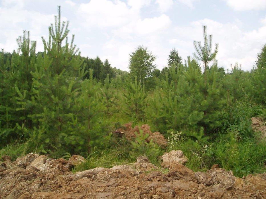 п. Залесье (городской округ Верхняя Пышма) - фото земельного участка (1)