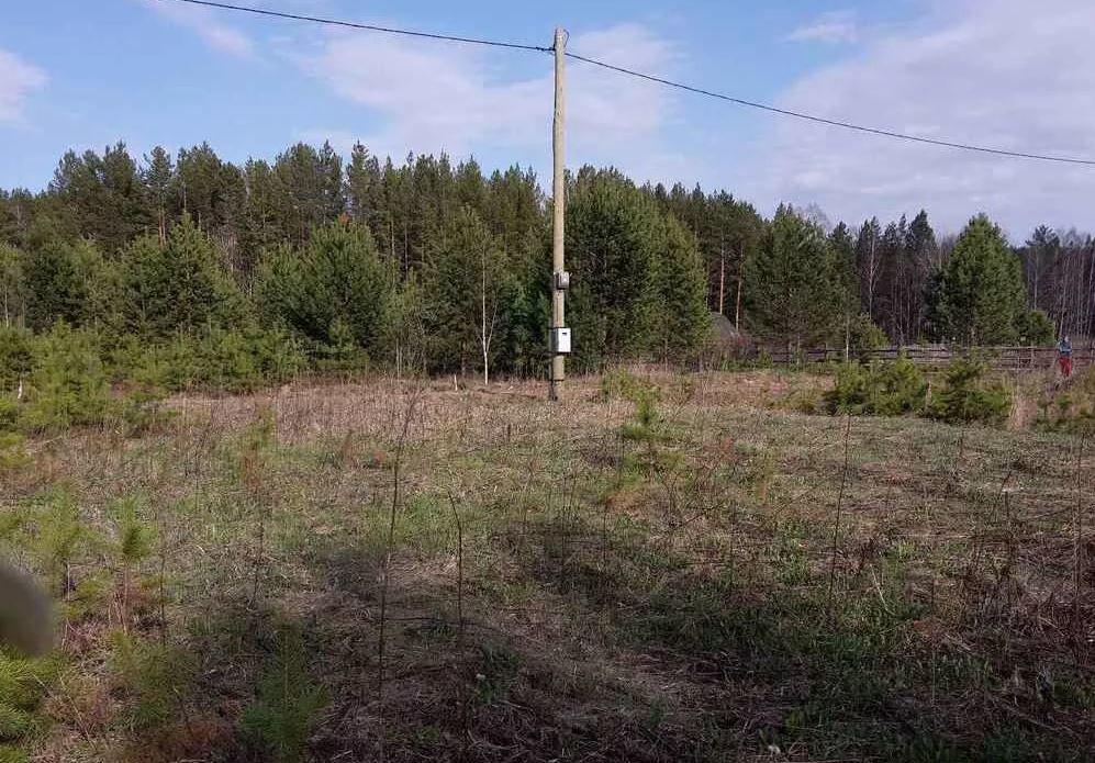 с. Кашино, ДПК Урожай (городской округ Сысертский) - фото сада (1)