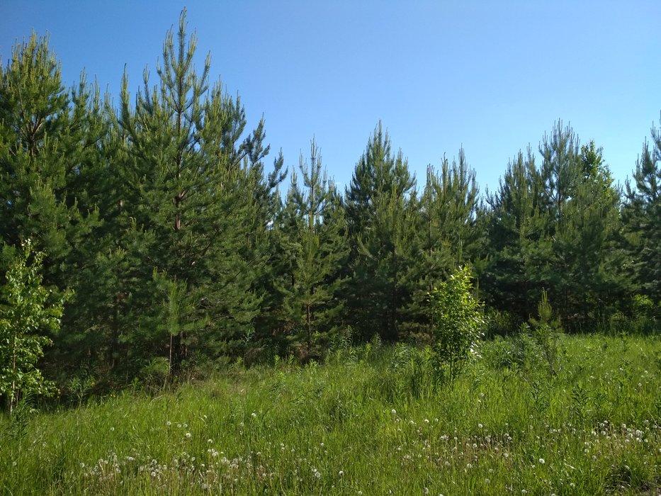 п. Бобровский, ул. Центральная, 986 (городской округ Сысертский) - фото земельного участка (1)
