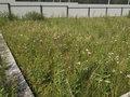 Продажа земельного участка: г. Березовский, ДНТ Станица, 3-2 (городской округ Березовский) - Фото 6