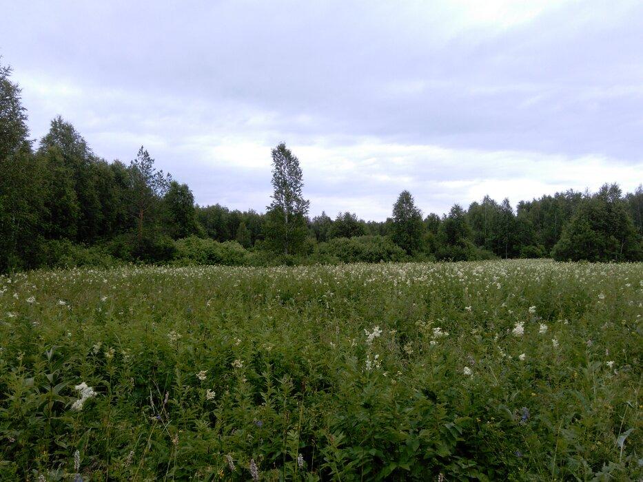 к.п. Становлянка, ул. Янтарная, 61 (городской округ Березовский) - фото земельного участка (1)