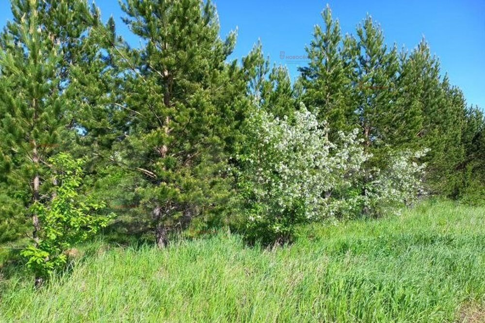 поселок городского типа Белоярский, СНТ УПИ-Баженово (городской округ Белоярский) - фото сада (3)