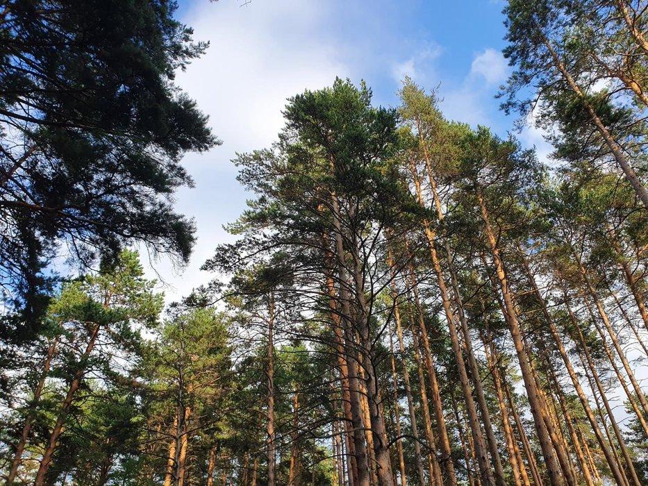 г. Березовский, ул. Бажова (городской округ Березовский) - фото земельного участка (1)