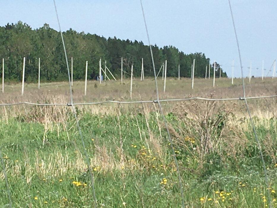 к.п. Гуси (городской округ Белоярский) - фото земельного участка (6)