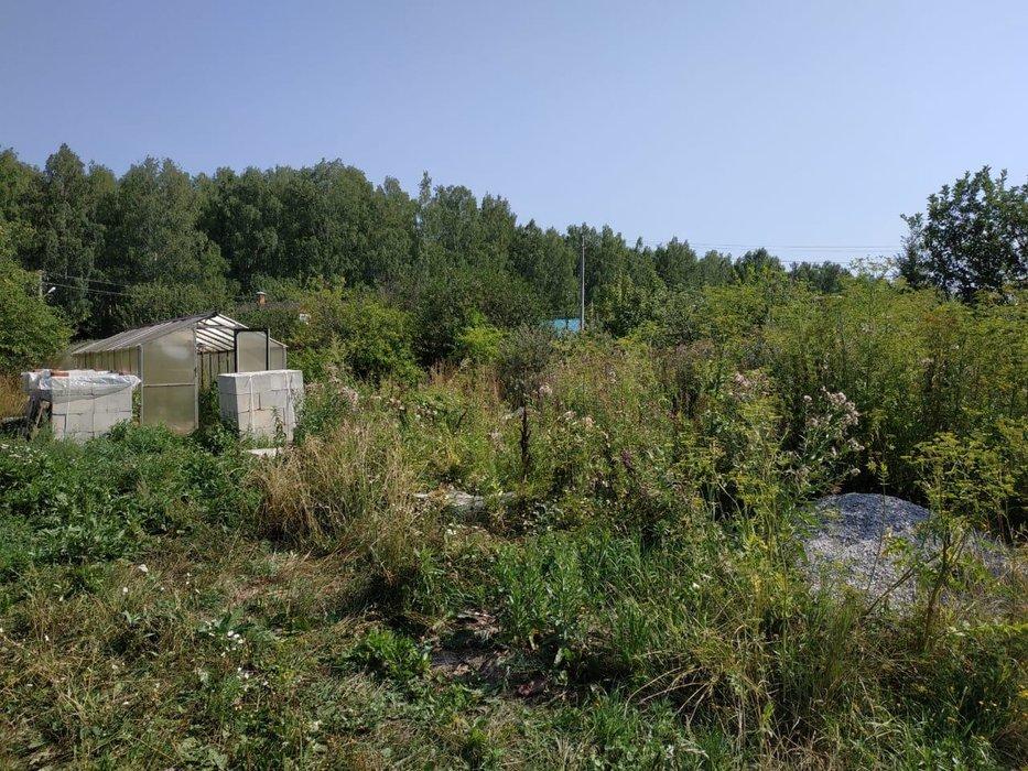 поселок городского типа Белоярский, СНТ Родник, уч. 84 (городской округ Белоярский) - фото сада (1)