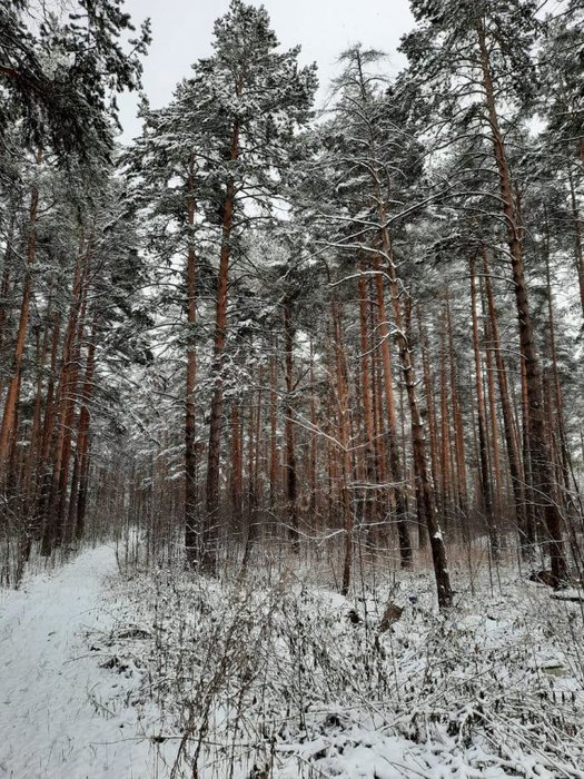 г. Березовский, ул. Нагорная (городской округ Березовский) - фото земельного участка (1)