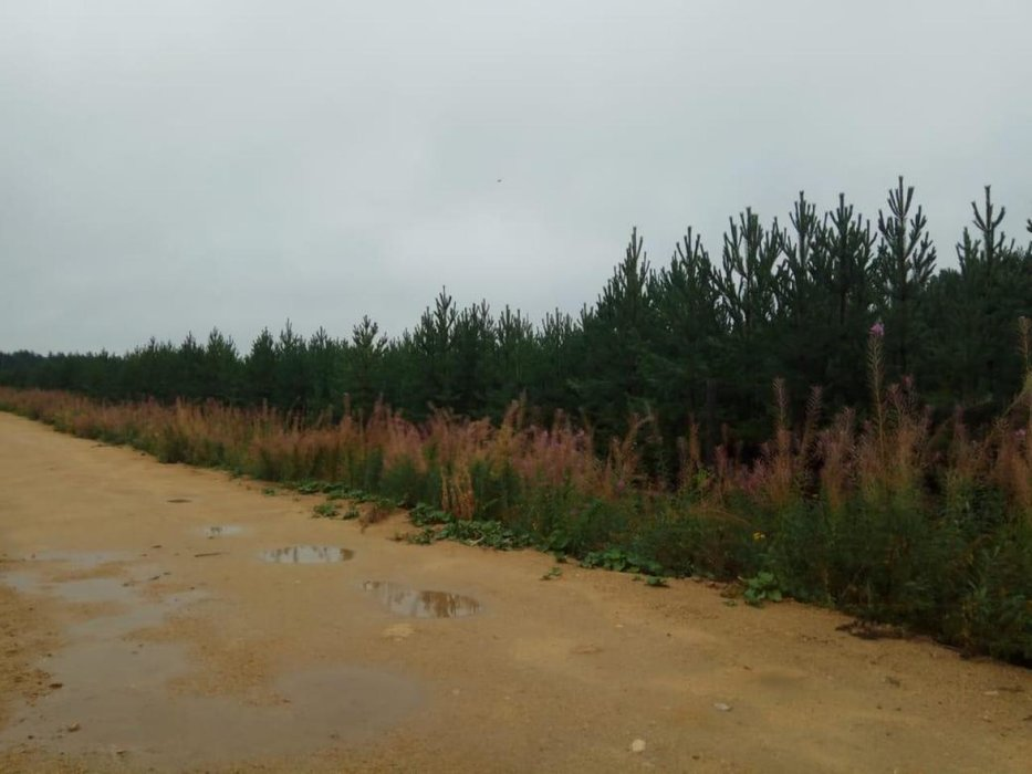 г. Ревда, ул. Спортивная (городской округ Ревда) - фото земельного участка (1)