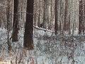 Продажа земельного участка: п. Растущий, ул. КСП Косулинское (городской округ Белоярский) - Фото 2
