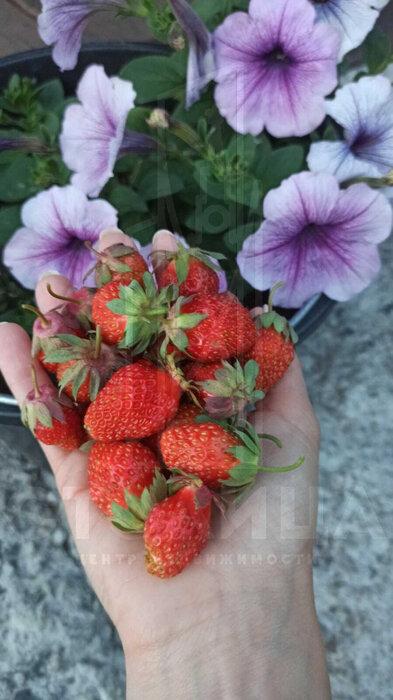 с. Малобрусянское, ул. Малиновая, 17 (городской округ Белоярский) - фото дома (7)