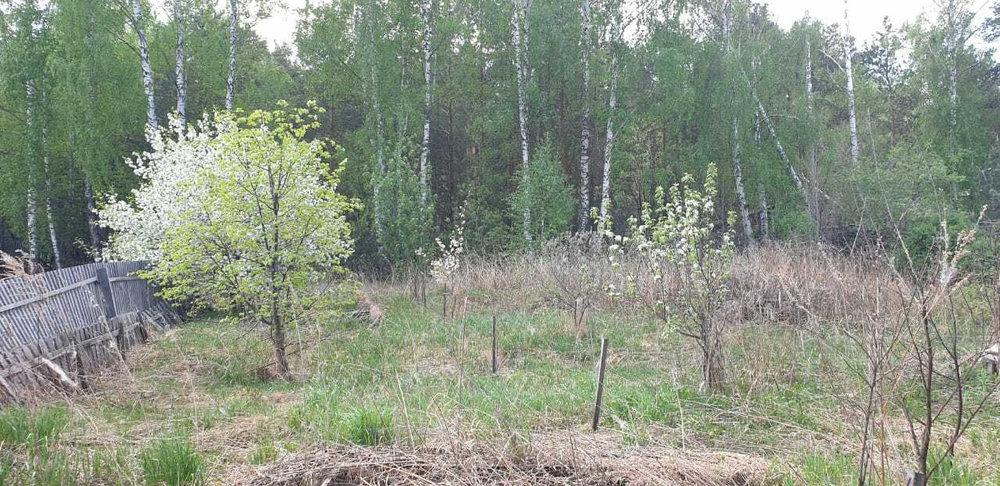 Екатеринбург (Горный щит) - фото земельного участка (1)