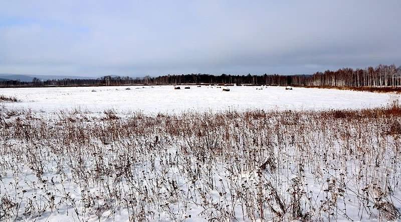 с. Николо-Павловское (городской округ Горноуральский) - фото земельного участка (1)