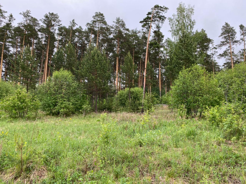 Екатеринбург, ул. ДНП Усадьба-Лес - фото земельного участка (1)