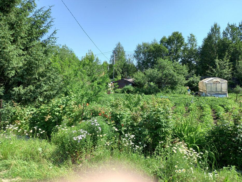 Екатеринбург, СНТ Коммунальщик - фото сада (6)