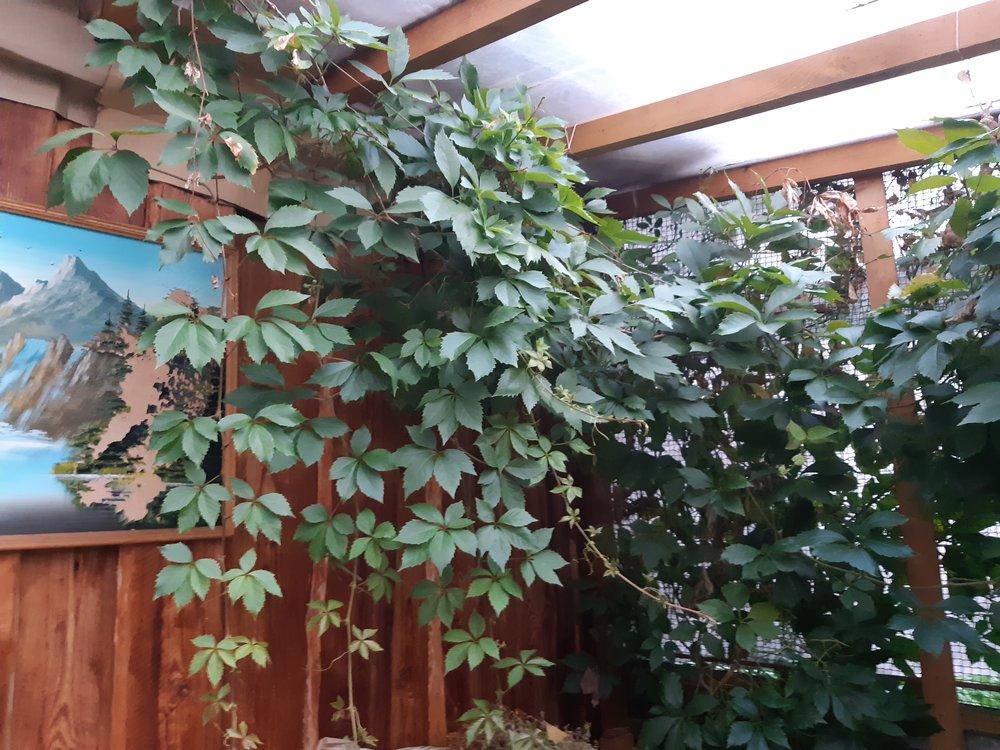 г. Березовский, ул. Свободы, 13 (городской округ Березовский) - фото дома (5)