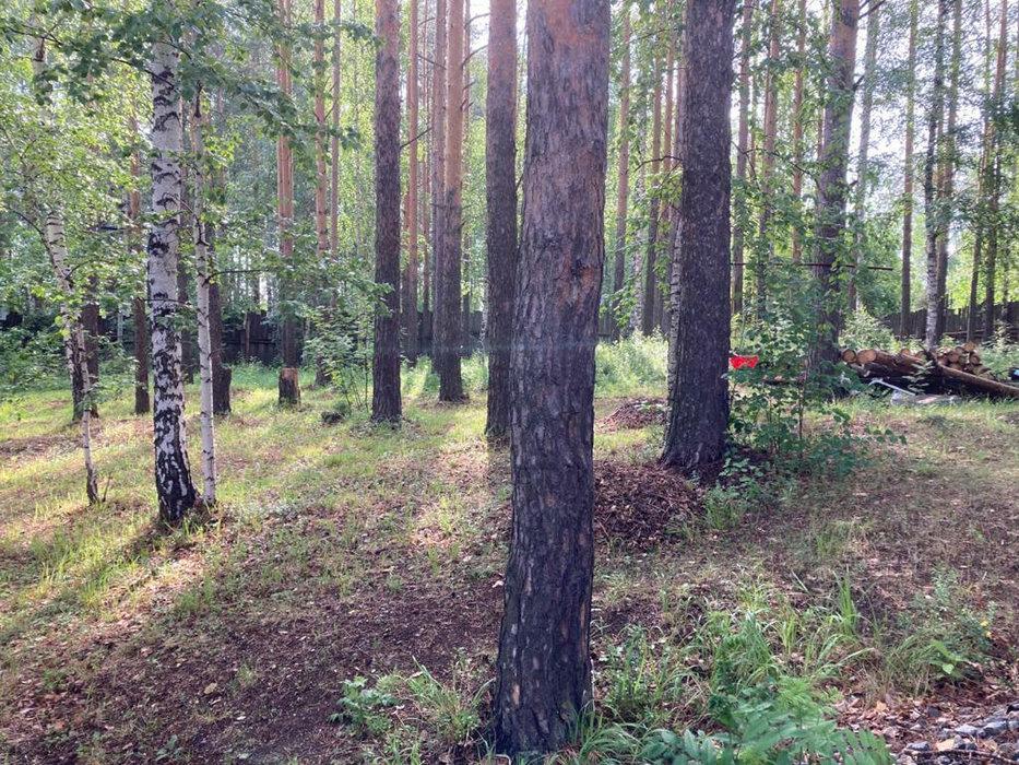 Екатеринбург, с/т Визовец-4 (Широкая речка) - фото сада (4)