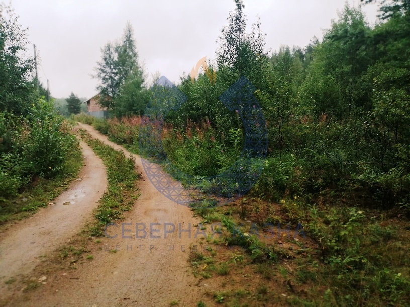 СНТ Меркурий, к/с   (городской округ Березовский) - фото сада (2)