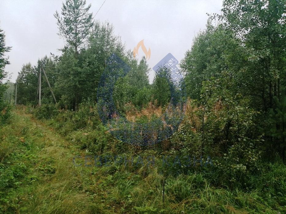 СНТ Меркурий, к/с   (городской округ Березовский) - фото сада (5)