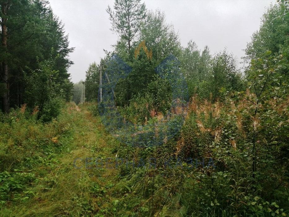 СНТ Меркурий, к/с   (городской округ Березовский) - фото сада (8)