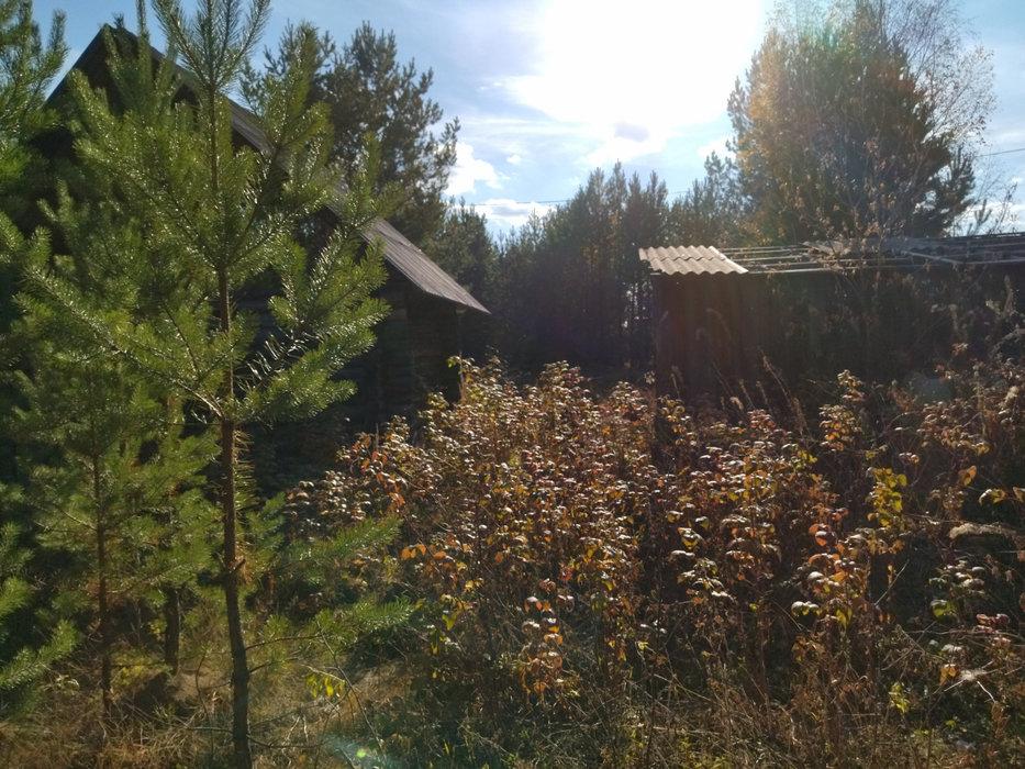 с. Черноусово, к/с Гилевская (городской округ Белоярский) - фото сада (3)