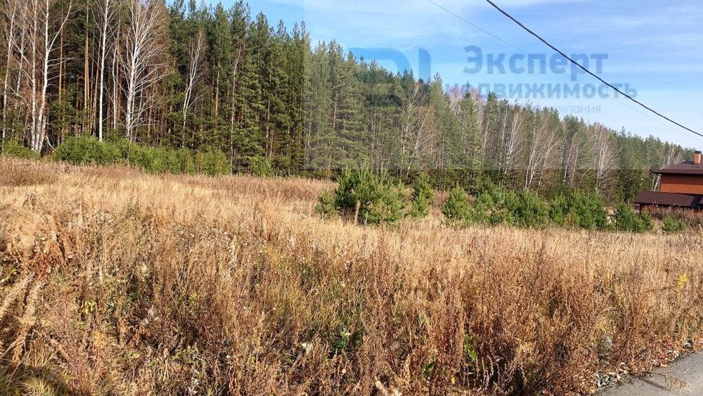 к.п. Шишкино, ул. Кедровая, 38 (городской округ Березовский) - фото земельного участка (5)