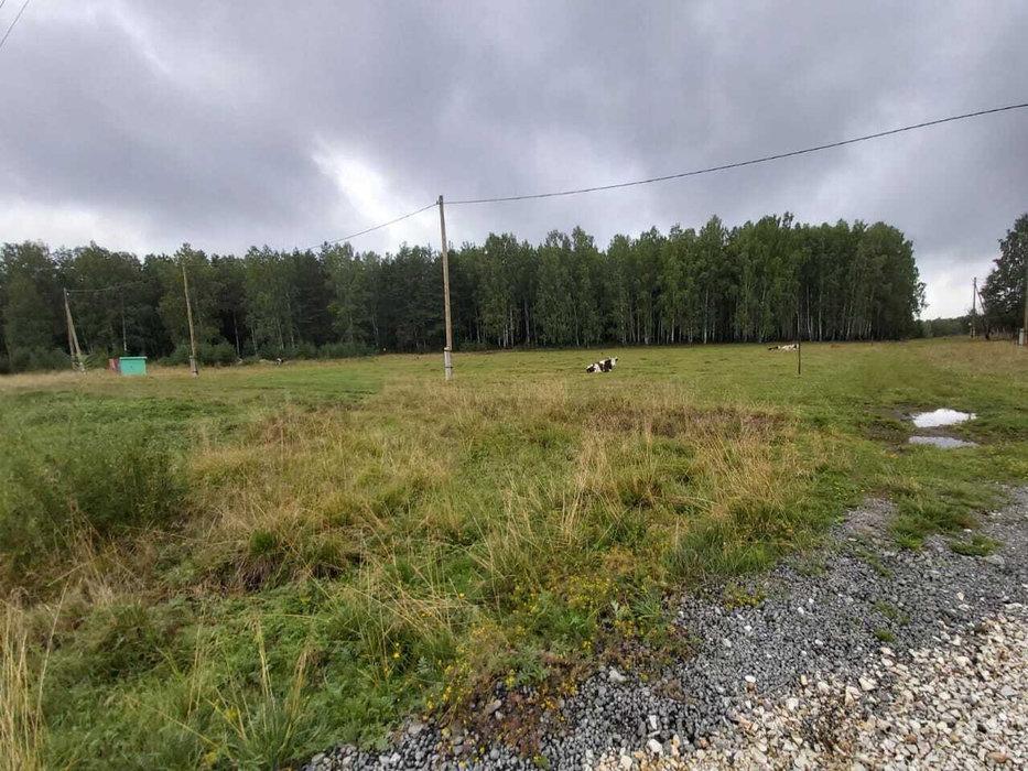 г. Дегтярск, ул. Карпинского, 33 (городской округ Город Дегтярск) - фото земельного участка (4)